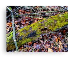 Nature's Recycling Canvas Print