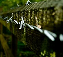 The barbed wire. by Ryan Gilmour