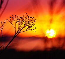 Through to the setting sun by Suzanne Edge
