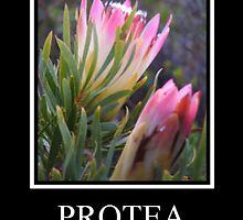 Protea by Karlientjie