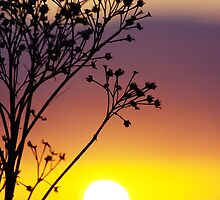 Through to the setting sun III by Suzanne Edge