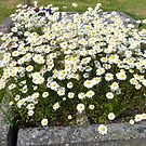 Flowers on Someone´s Grave by HELUA