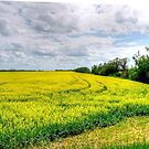 Canola Field by Larry Trupp