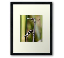 Two Blue Territorial Defenders Framed Print