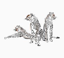 Cheetah by magicalview