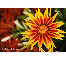 Scorching Petals Photographic Print