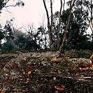 Boddington Bush by supercujo