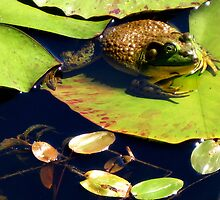 Frog on Lily Pad by ChristineRose