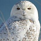 Snowy Owl...Just the two of us by lloydsphotos