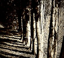 Line of Trees by ChristineRose