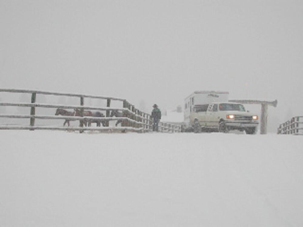 Montana Snow Storm by lincolngraham