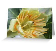 Tulip Tree - JUSTART © Greeting Card