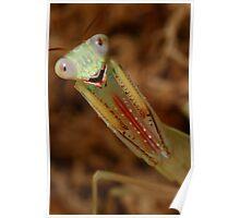 baby jade mantis threat pose Poster