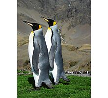 King Penguins Photographic Print
