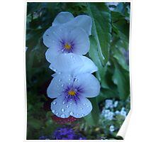 White and Purple Flowers With Dew  Poster