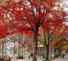 Fall(ing) by eleveneleven