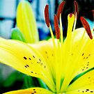 Yellow Lilly  by AngryGoldfish