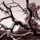 Fallen Oak by AngryGoldfish