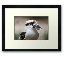 Kookaburra portrait Framed Print