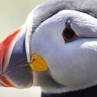 Puffin Profile #2 by Meurig Davies
