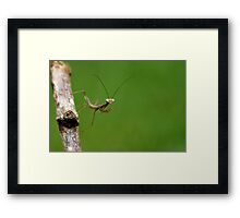 just hatched jade mantis Framed Print