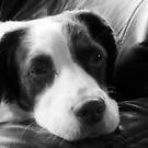 Canine Calm by sarnia2