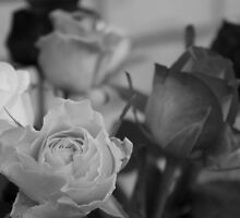 Roses in black and white  by Margaret Stanton