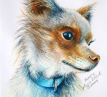 BERTY CHIHUAHUA 2009 by Louise Elisabeth Hunt