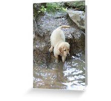 """Thunder"" At Waters Edge- 10 Greeting Card"
