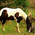 A Paint horse Grazing by Susan Blevins