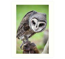 Sooty Owl Art Print