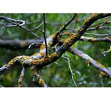 Lichen - Morialta Conservation Park, South Australia Photographic Print