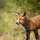 All Ears by Peter Denness