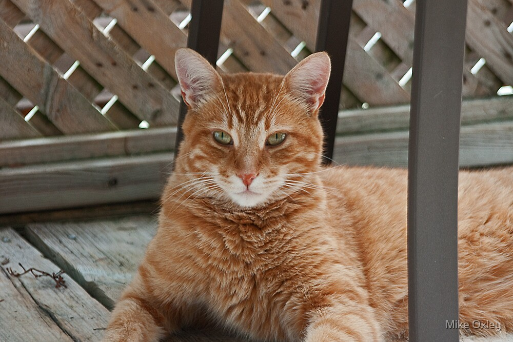 What's a good name for a cat on a very hot summer's day? by Mike Oxley