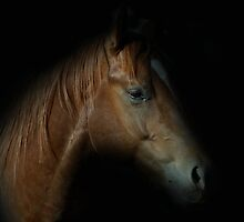 The Quarter Horse by julie anne  grattan