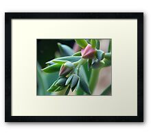 ©NS Green Dreams IIIA Framed Print