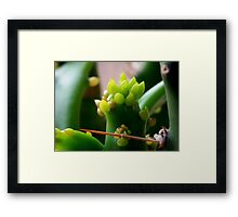 ©NS Green Dreams IIA Framed Print
