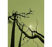 This is How the World Ends... Photographic Print