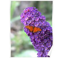 Buddleia Butterfly Bush HDR Poster