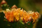 Warm Glow of Spring ~ Pancho Villa State Park, Columbus, NM by Vicki Pelham