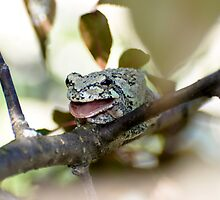 Gray Treefrog 1 by Sean McConnery