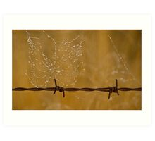 Web on the wire Art Print