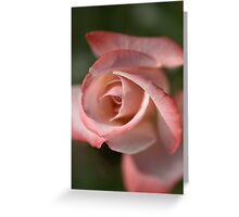 The Eye Of The Rose Greeting Card