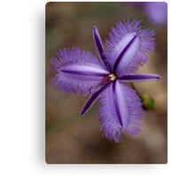Fringed Lily Canvas Print