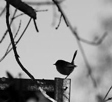 Fairy Wren by Selinah Bull