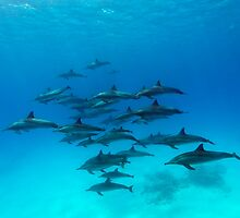 Dolphins Paradise by Norbert Probst