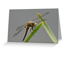 Resting Dragonfly Greeting Card