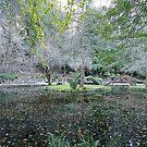 Alfred Nicholas Gardens, Sherbrooke, Victoria by lilleesa78
