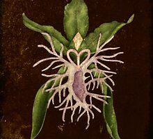 Botanica - Marilynin Ottawa Orchid by Sybille Sterk