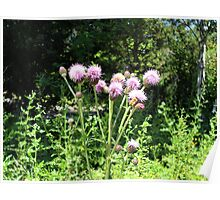 Purple Flowers & Bumble Bee Poster